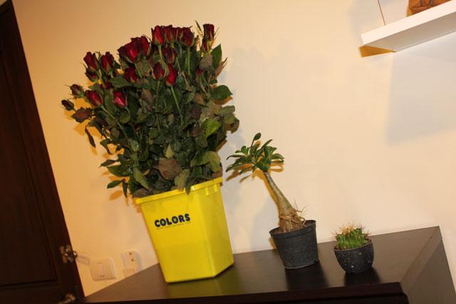 наши цветы :)