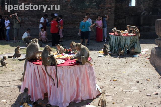 фестиваль обезьян в Лопбури