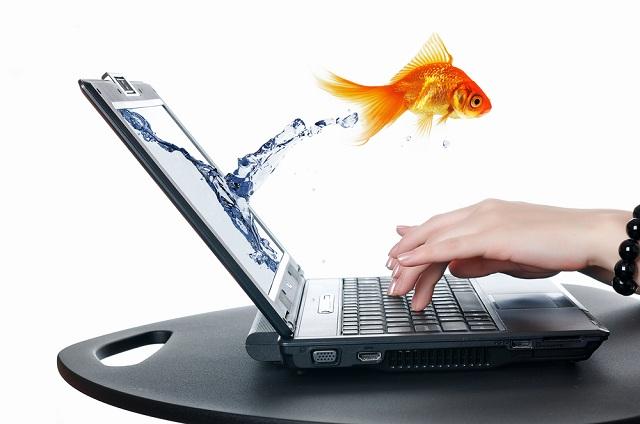 загадываем желание у золотой рыбки