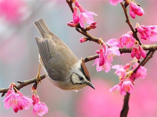 Весна на ipadstory.ru