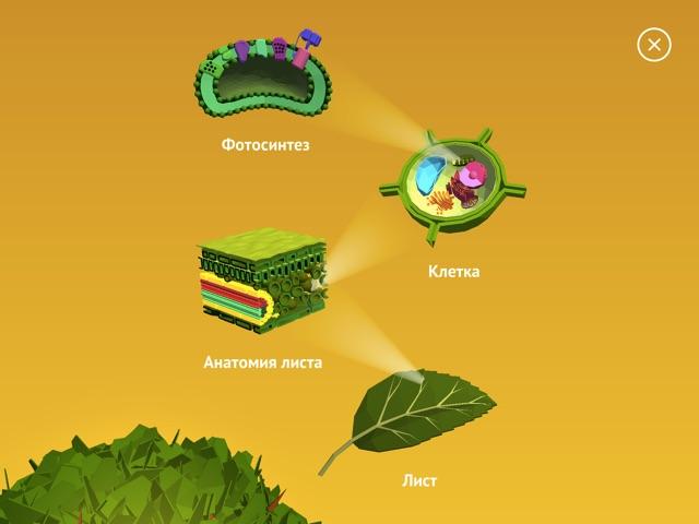 NAMOO НАМУ - Чудеса из мира растений