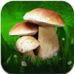 Большая энциклопедия грибов на iPad